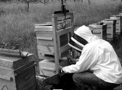 apiculture-big
